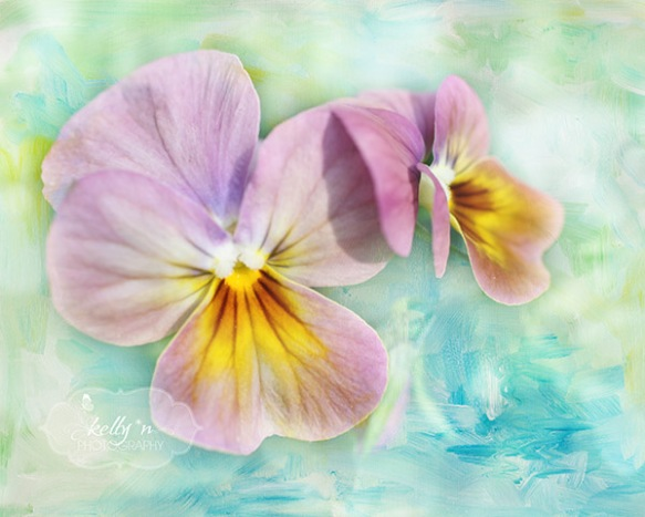 watercolor pansies web