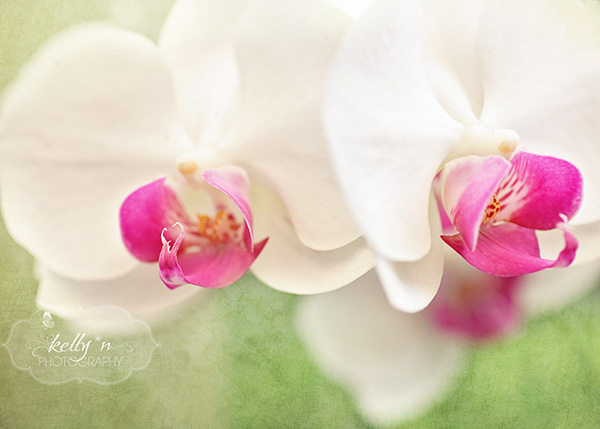 orchids 6 web